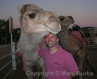 Alice Springs camel Frontier Camel Tours