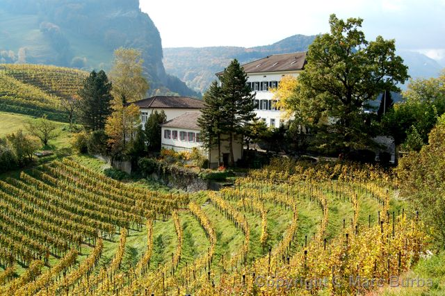 Balzers vineyard, Liechtenstein