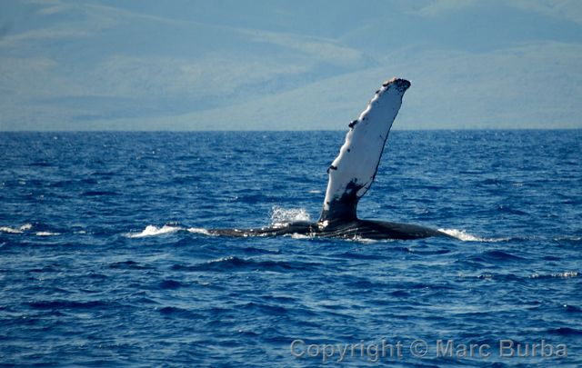 Whale-watching tour Maui