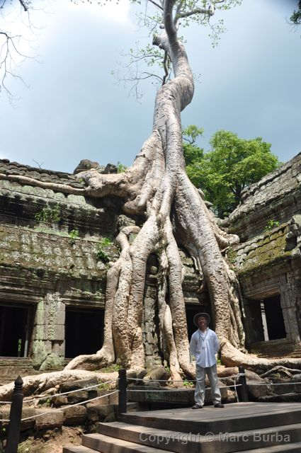 Ta Prohm banyan tree