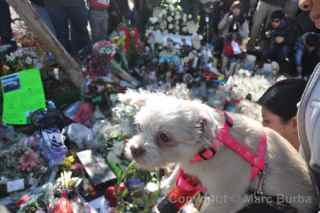 Paul Walker Memorial Meet dog