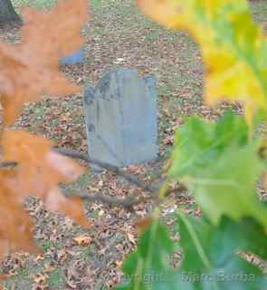Old Burying Point leaves