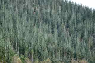 reforestation