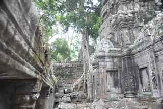 Ta Prohm, Cambodia, trees