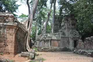 Ta Prohm, Cambodia, destruction