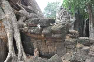 Ta Prohm, Cambodia, tree