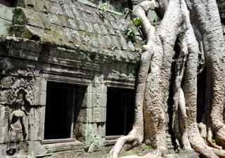 Ta Prohm, Cambodia, tree roots